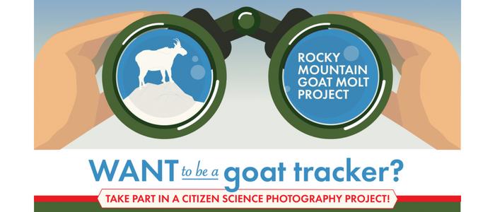 Goat Molt Project